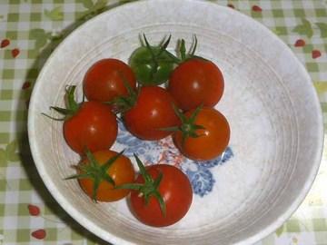 ミニトマト2012_2.jpg