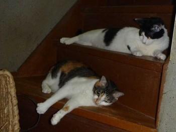 階段猫.jpg
