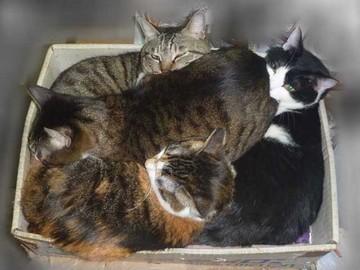 4猫箱1_1.JPG