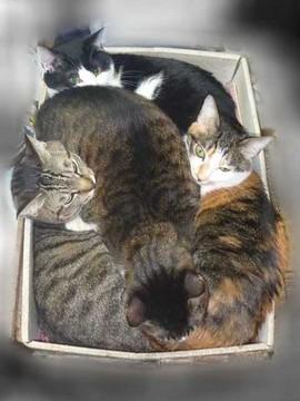 4猫箱1_2.JPG
