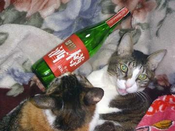 樽酒1.jpg